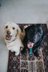 August blog WID save our furry friends
